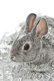 Piccolo coniglio Immagine Stock Libera da Diritti