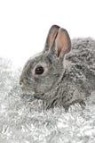 Piccolo coniglio Fotografie Stock