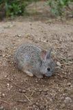 Piccolo coniglio fotografie stock libere da diritti