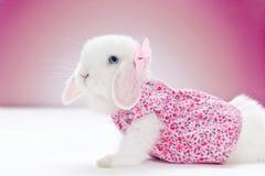 Piccolo coniglio bianco Immagini Stock Libere da Diritti