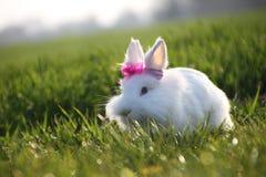 Piccolo coniglio bianco su erba verde di estate Fotografia Stock Libera da Diritti