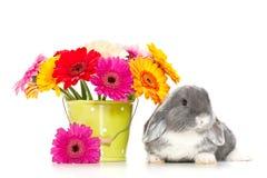 Piccolo coniglio con i fiori Immagine Stock Libera da Diritti