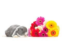 Piccolo coniglio con i fiori Fotografie Stock Libere da Diritti