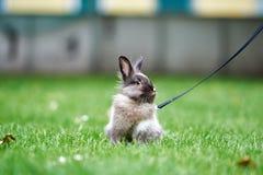 Piccolo coniglio di Brown in erba verde immagine stock