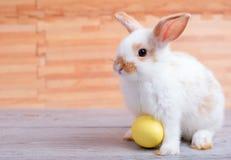 Piccolo coniglio di coniglietto adorabile con il soggiorno giallo dell'uovo di Pasqua sulla tavola grigia con il modello di legno fotografia stock