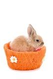 Piccolo coniglio di coniglietto sveglio su un fondo bianco Immagini Stock Libere da Diritti
