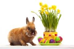 Piccolo coniglio divertente con le uova di Pasqua Immagini Stock