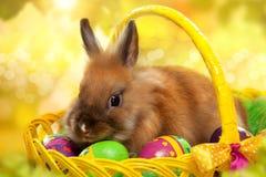 Piccolo coniglio divertente fra la merce nel carrello delle uova di Pasqua Immagini Stock