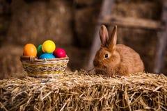 Piccolo coniglio divertente fra le uova di Pasqua nell'erba del velluto, wi dei conigli Fotografia Stock Libera da Diritti