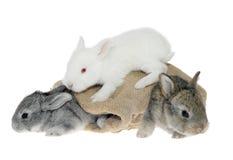 Piccolo coniglio nel sacchetto Fotografia Stock