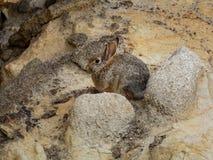Piccolo coniglio a riposo immagini stock