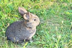 Piccolo coniglio sveglio che si siede sul prato verde Fotografia Stock
