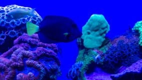 Piccolo corallo del colorfull e del pesce sotto il mare fotografia stock