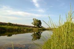 Piccolo corso d'acqua Immagini Stock Libere da Diritti