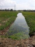 Piccolo corso d'acqua Immagine Stock