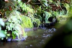 Piccolo corso d'acqua 2 Fotografie Stock