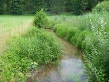 Piccolo corso d'acqua calmo in un'alta erba di American National Standard della canna Immagine Stock