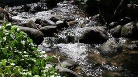 Piccolo corso d'acqua che circola sulle rocce con le piante verdi archivi video