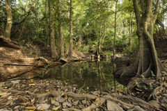 Piccolo corso d'acqua che si alimenta alla cascata di Haew Narok, Khao Yai dell'acqua Immagini Stock Libere da Diritti