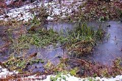 Piccolo corso d'acqua con erba verde Immagini Stock Libere da Diritti