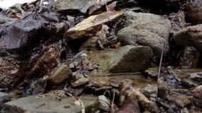 Piccolo corso d'acqua del fiume in primavera stock footage