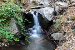 Piccolo corso d'acqua della cascata dall'interno della foresta della castagna Immagine Stock Libera da Diritti