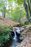 Piccolo corso d'acqua della cascata dall'interno della foresta della castagna Fotografia Stock Libera da Diritti
