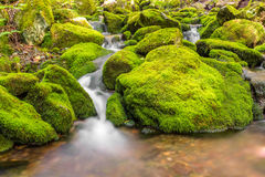 Piccolo corso d'acqua della foresta vicino alle terze cadute della volta Immagini Stock