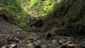 Piccolo corso d'acqua in montagne video d archivio
