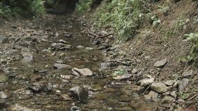 Piccolo corso d'acqua in montagne archivi video