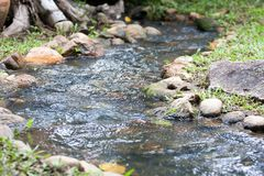 Piccolo corso d'acqua nel giardino Immagine Stock Libera da Diritti