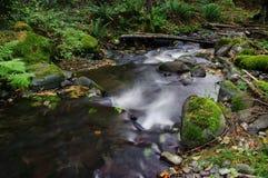 Piccolo corso d'acqua nel paradiso Immagini Stock Libere da Diritti