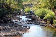 Piccolo corso d'acqua nella foresta. Fotografia Stock Libera da Diritti