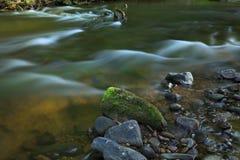 Piccolo corso d'acqua nella foresta Fotografia Stock