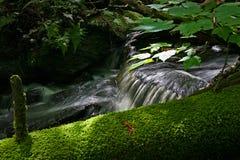 Piccolo corso d'acqua nella foresta in Quebec Canada Immagini Stock