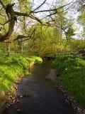 Piccolo corso d'acqua o fiume Fotografie Stock