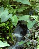 Piccolo corso d'acqua tropicale Immagini Stock Libere da Diritti