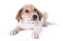 Piccolo cucciolo fotografia stock