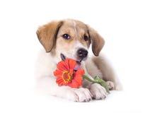 Piccolo cucciolo fotografie stock