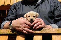 Piccolo cucciolo Fotografia Stock Libera da Diritti