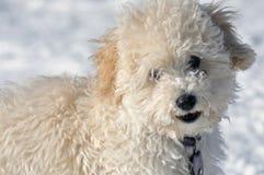 Piccolo cucciolo Immagini Stock Libere da Diritti