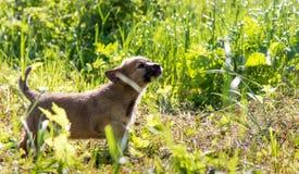 Piccolo cucciolo curioso Fotografia Stock Libera da Diritti