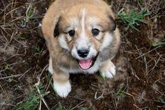 Piccolo cucciolo di divertimento sveglio all'aperto sull'erba verde Fotografia Stock Libera da Diritti