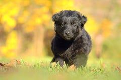 Piccolo cucciolo nero in giardino fotografia stock