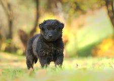 Piccolo cucciolo nero in giardino immagini stock