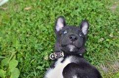 Piccolo cucciolo nero sveglio che si siede sul verde Immagine Stock Libera da Diritti