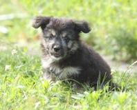 Piccolo cucciolo piacevole immagine stock