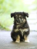 Piccolo cucciolo senza casa nero fotografie stock libere da diritti