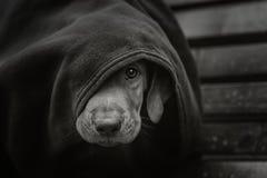 Piccolo cucciolo senza tetto immagini stock libere da diritti