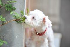 Piccolo cucciolo sveglio che odora un fiore Fotografia Stock